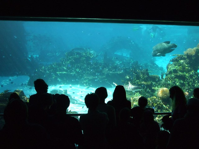 Sea World Aquarium Flickr Photo Sharing
