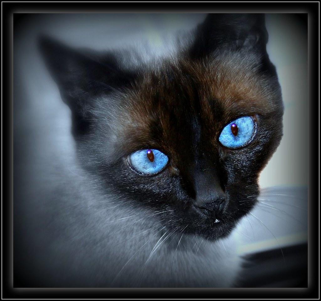 Black Cat Spin