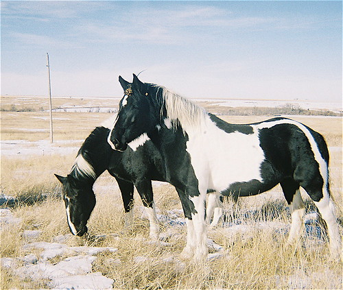 HorsesCloseUp