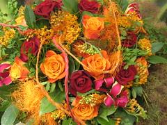 Blumen & Blüten / flowers & blossoms
