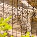 San Diego Zoo 048