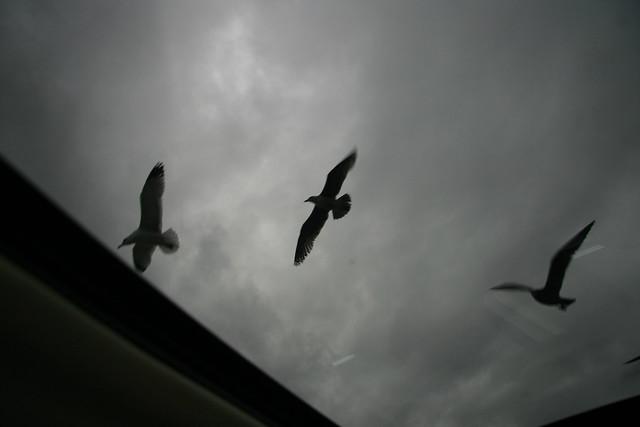 Seagulls in Malibu