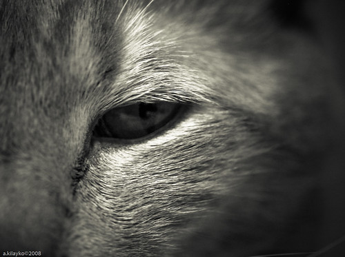 Eye of the Kitty
