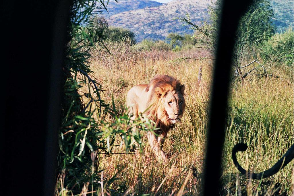Very close Lions