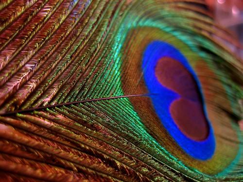 micro fibre