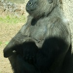 Los Angeles Zoo 027
