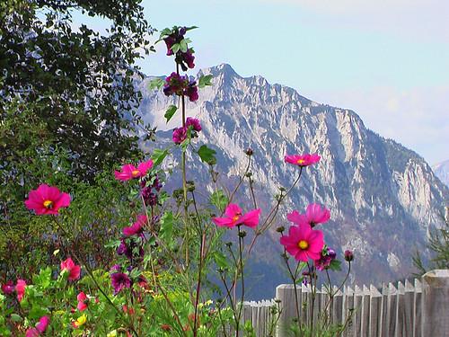 autumn mountain flower landscape austria österreich herbst blumen berge alpen landschaft steiermark eisenerz anawesomeshot citrit imagesofharmony salveanatureza qualitypixels dragondaggerphoto