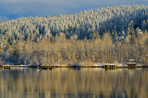 portmoody portmoodyinlet canada nikond800 nature water ocean inlet winterlandscape wintertrees mountainsnow