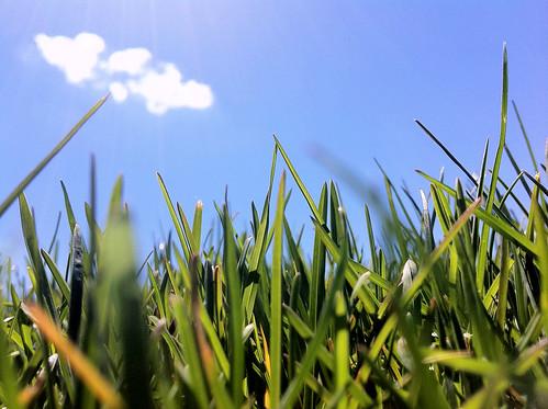 sky cloud green eye apple grass view 4 jordan worms iphone hipwell jordanhipwell jordanhipwellphotography jhphotograpphy