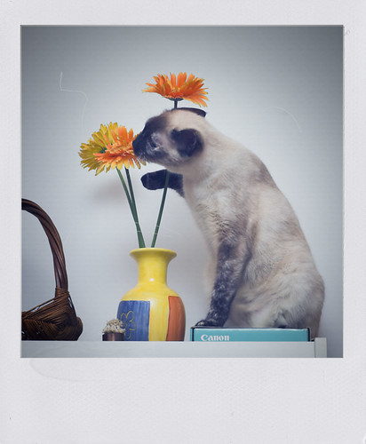 How To Be A Cat, Lesson 14: Sniffing Flowers