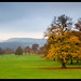 Autumn landscape @ Chatsworth House estate
