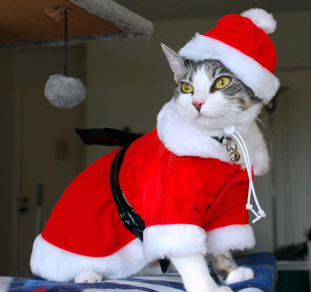 Новогодние костюмы для кота своими руками