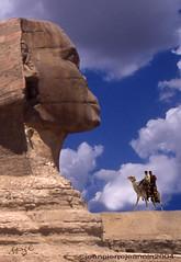 Egypte - Le Sphinx vu profil droit (2C)