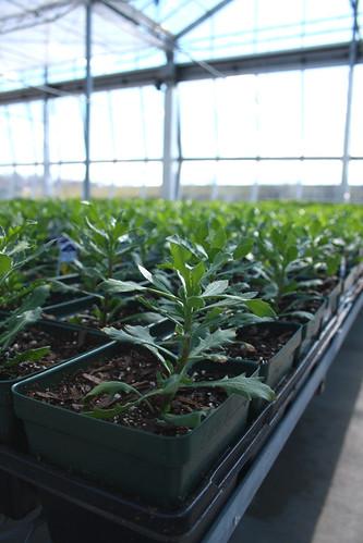 I love greenhouses...