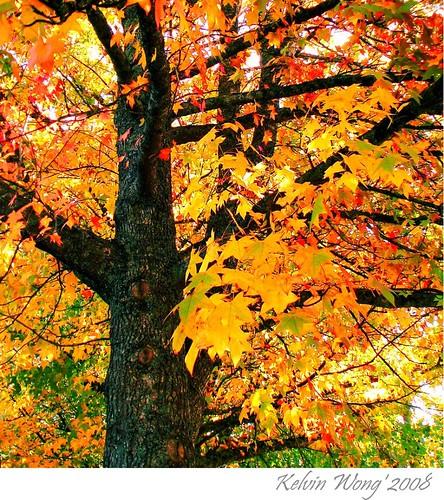Autumn in Adelaide 阿德雷得的秋天