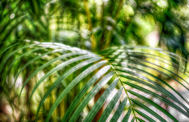 Sarasota Jungle Gardens: Easter Egg Hunt   See 885 Traveler Reviews, 633  Candid Photos, And Great Deals For Sarasota, FL, At TripAdvisor.