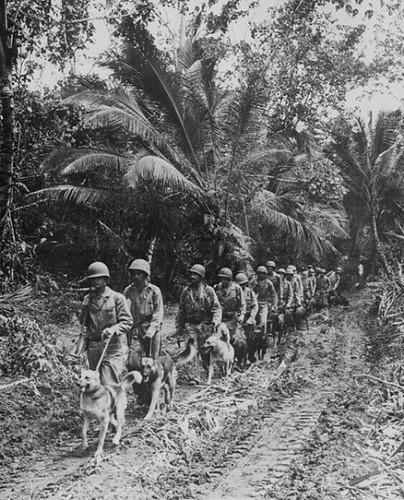 484px-Marine-war-dogs