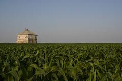 prairie, agriculture, farm, field, plain, green, crop, rural area, plantation,