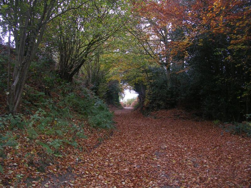 Circular Gap 2 Leafy lane in autumn. Wadhurst short circular