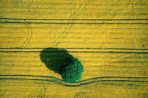 Maximising productivity on the farmland that we have reduces demand for new farmland. (Photo: 'Aerial Photography' flickr)
