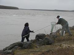 fishing, sea, fisherman,