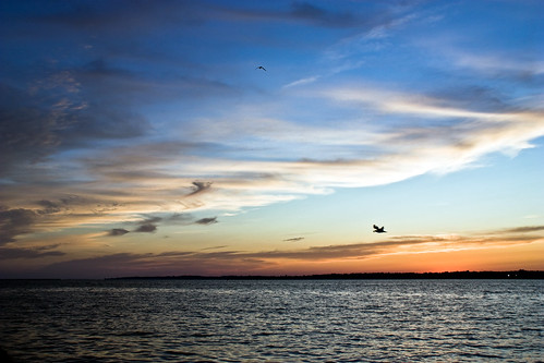 sunset sky water birds silhouette clouds