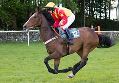Cartmel Races (May 2011)