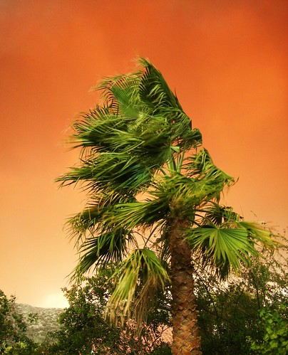 sky orange fire wind smoke palm explore palmtree brushfire blowininthewind wildfire santaclarita aguadulce yahoonews saugus castaic canyoncountry scv 5000views santaanas explored buckweedfire danwatsonphotography nothingsignified