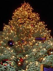Ghirardelli Tree Lighting in 2007