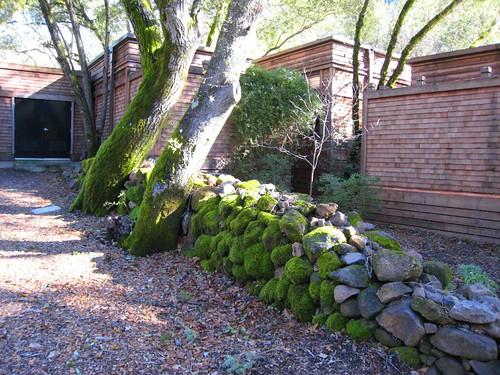 napa, calistoga ranch, moss, green IMG_1329