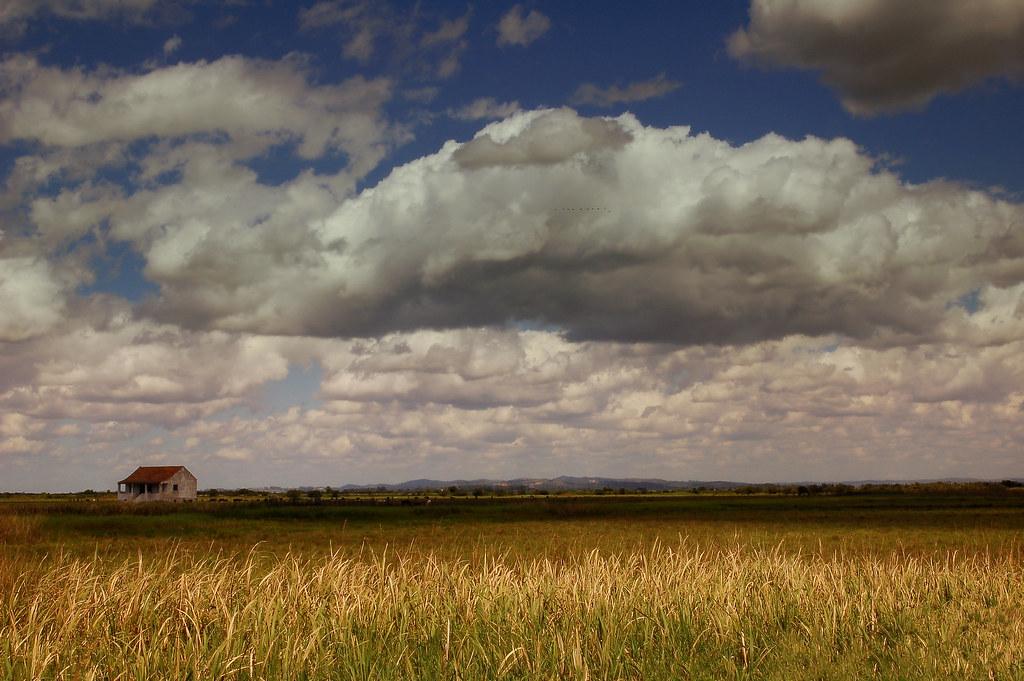 La Regione Friuli si costituisce in giudizio presso il TAR per fermare la coltivazione di ogm