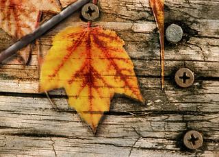 Nailed Leaf