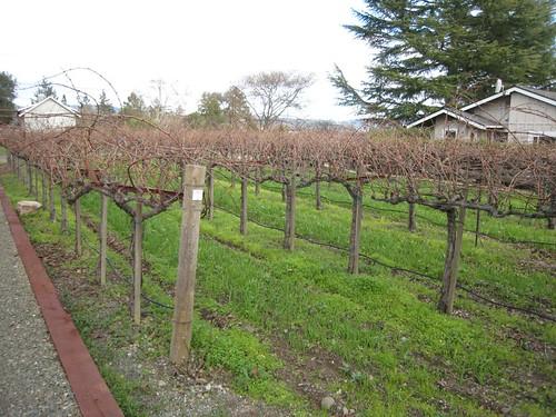 napa, Anomaly Vineyards, wine, wine tasting… IMG_1241