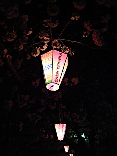 The Cherry Blossom Promenade at night