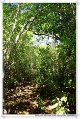 20041020_Guana@BVI_Grand Ghut Trail_001_A