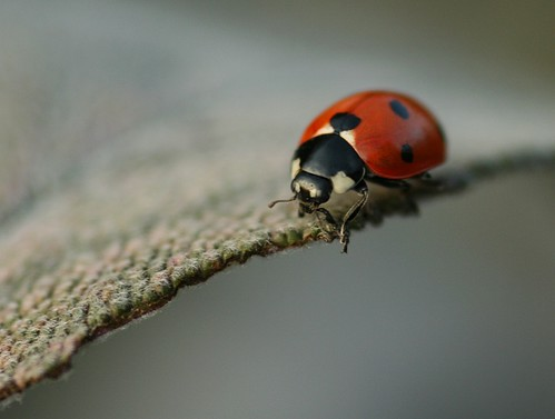 Ladybird on the edge