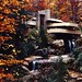 USA - Pennsylvania - Fall at Fallingwater