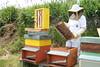 Valeria the Beekeeper