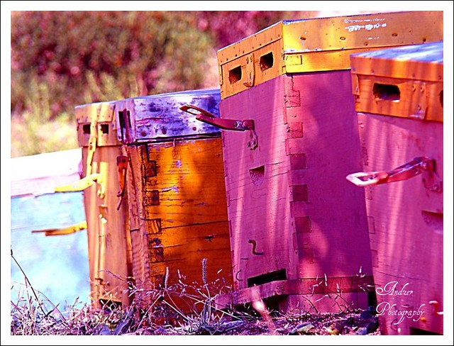 Beehives in pink