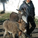 Karakol Animal Market, Little Donkeys - Kyrgyzstan