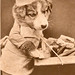 Puppy - I Want Customers - old pc - AJB No 73