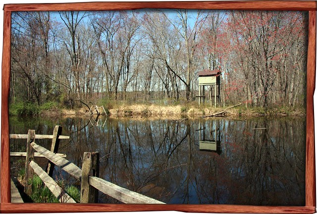 Churchville Nature Center Pumpking
