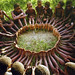 africans children feet circle by v3e42