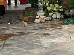 Cats at Wat Pho - Bangkok (2)