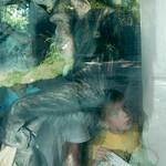 Los Angeles Zoo 064