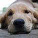 Sleepy Oshi by [ tha ] aka mr. wagyu