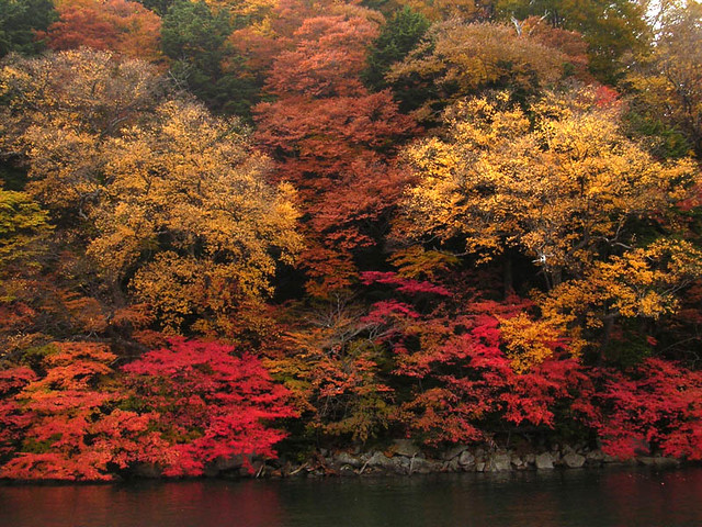 leaves at chuuzenji lake