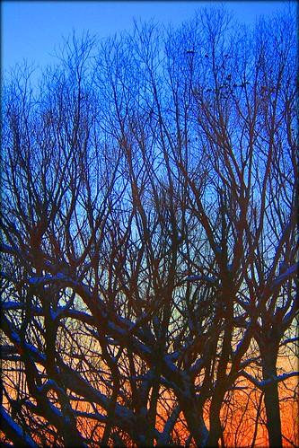 blue trees sunset orange