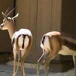 Los Angeles Zoo 040