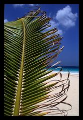 Palma sul mare